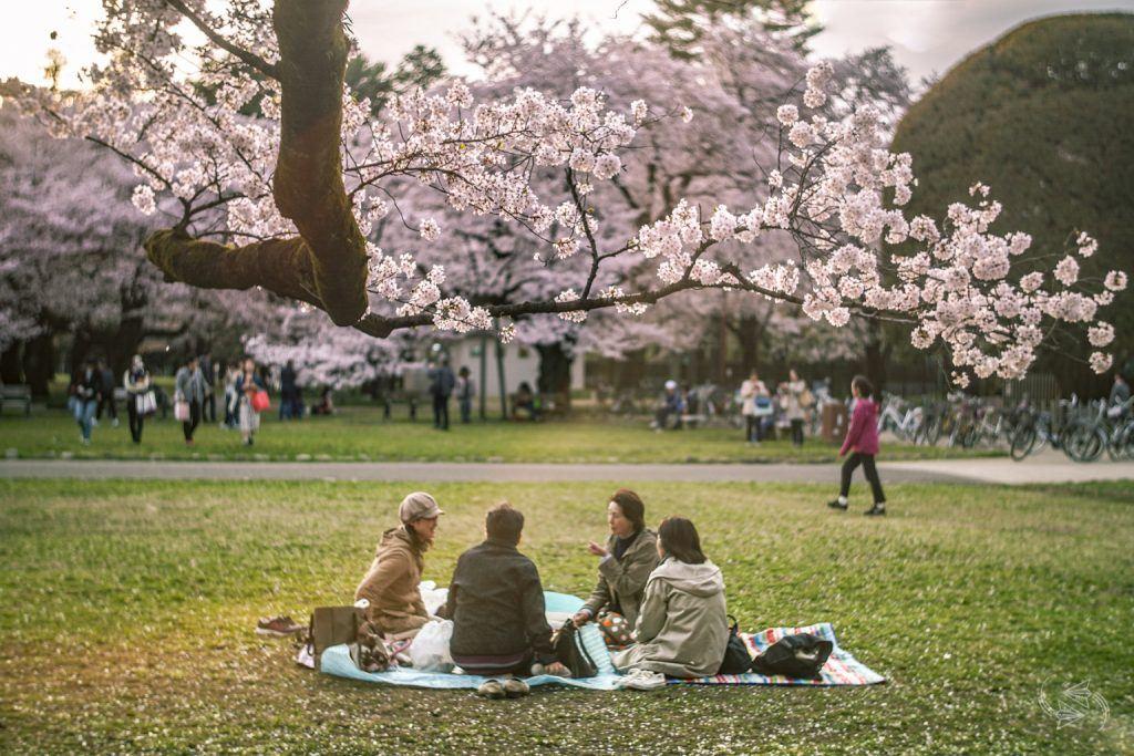 hanami koganei park 1024x683 1 - Tóquio pede ao público que não faça festas com flores de cerejeira