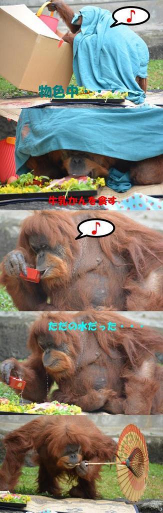 muka 2 - Muka faz 50 anos e se torna a anciã do zoológico de Hamamatsu